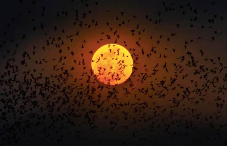 Lua cheia, full moon party comemorada em diversos países do Sudeste Asiático.