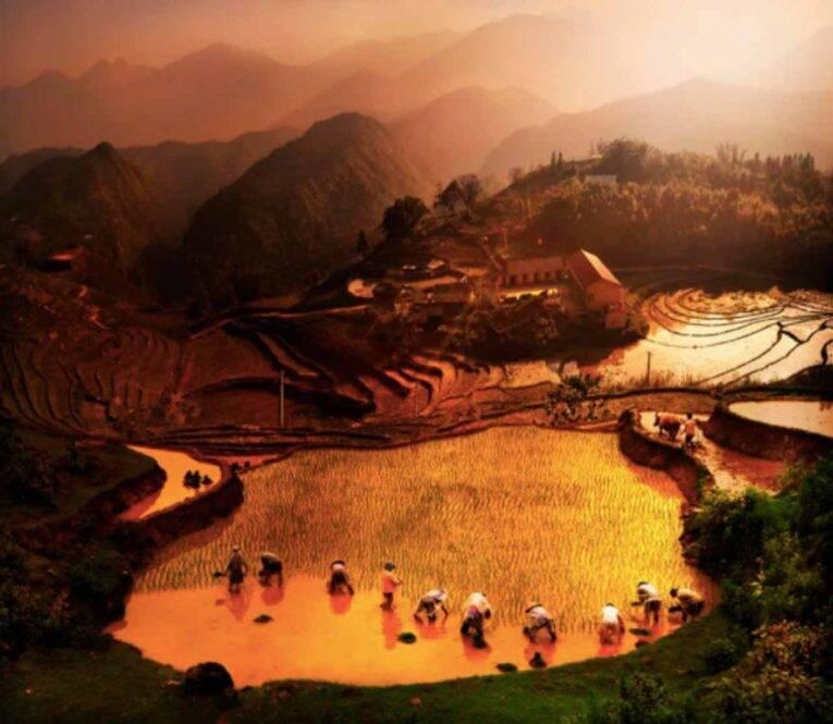 Os campos de arroz típicos da Ásia.