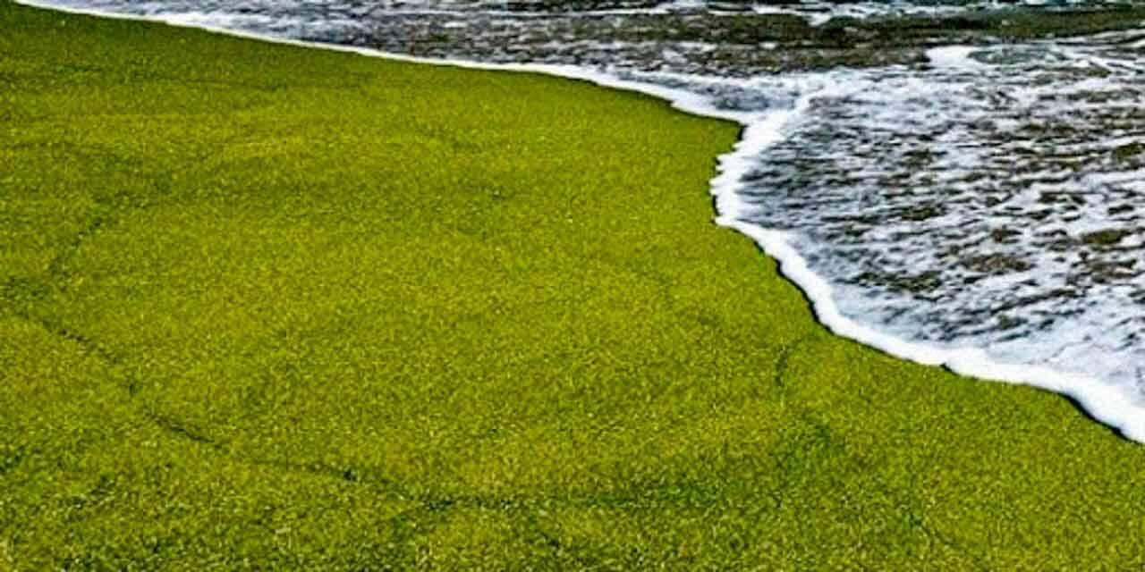 Praia de areia verde chamada Papakolea beach em Hawai nos EUA.