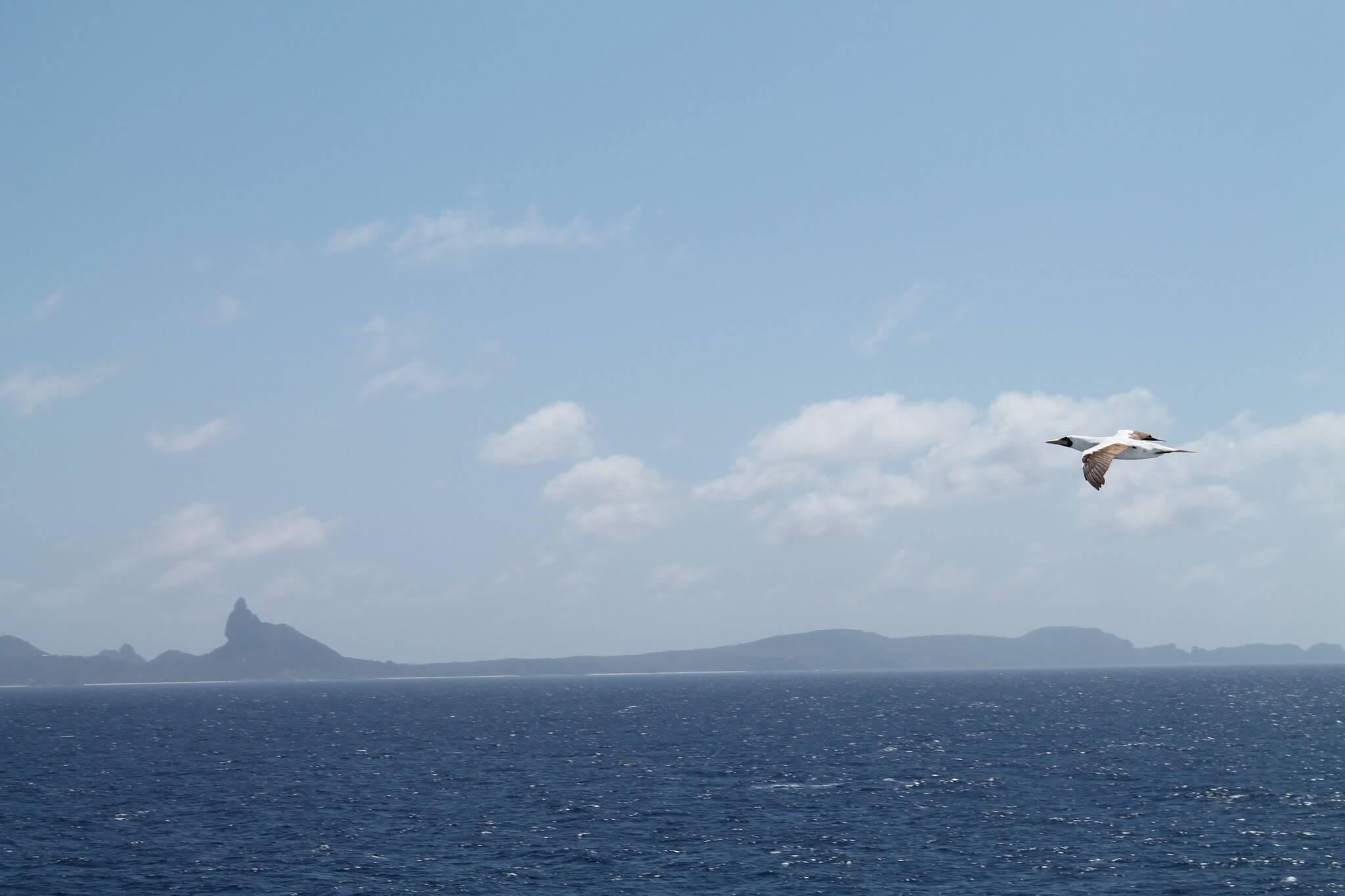 Noronha - Costa Favolosa3. A ver baleias