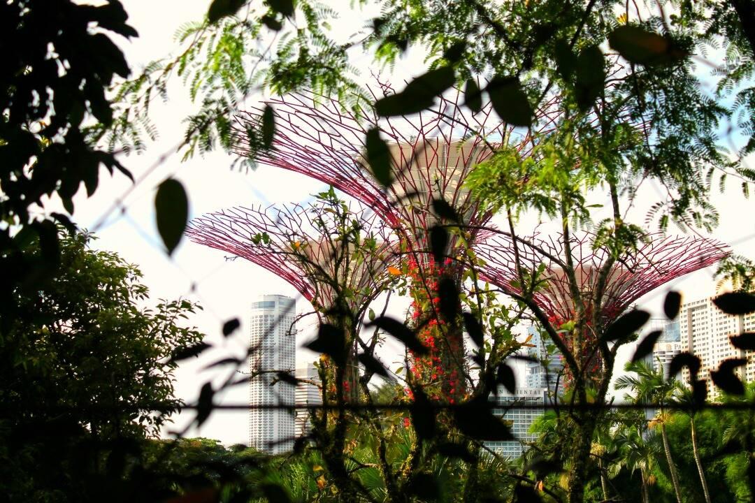 As Super Árvores vista de um ângulo diferente - Gardens by the Bay