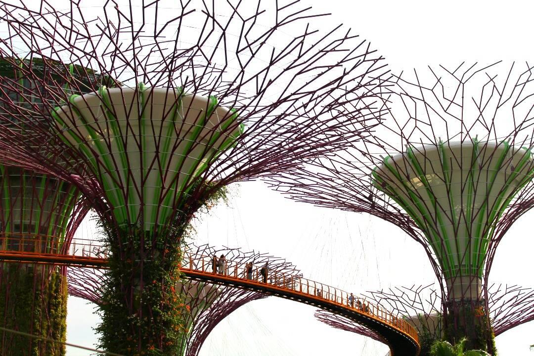 OCBC Skyway, ponte entre as Super Árvores no Gardens by the Bay