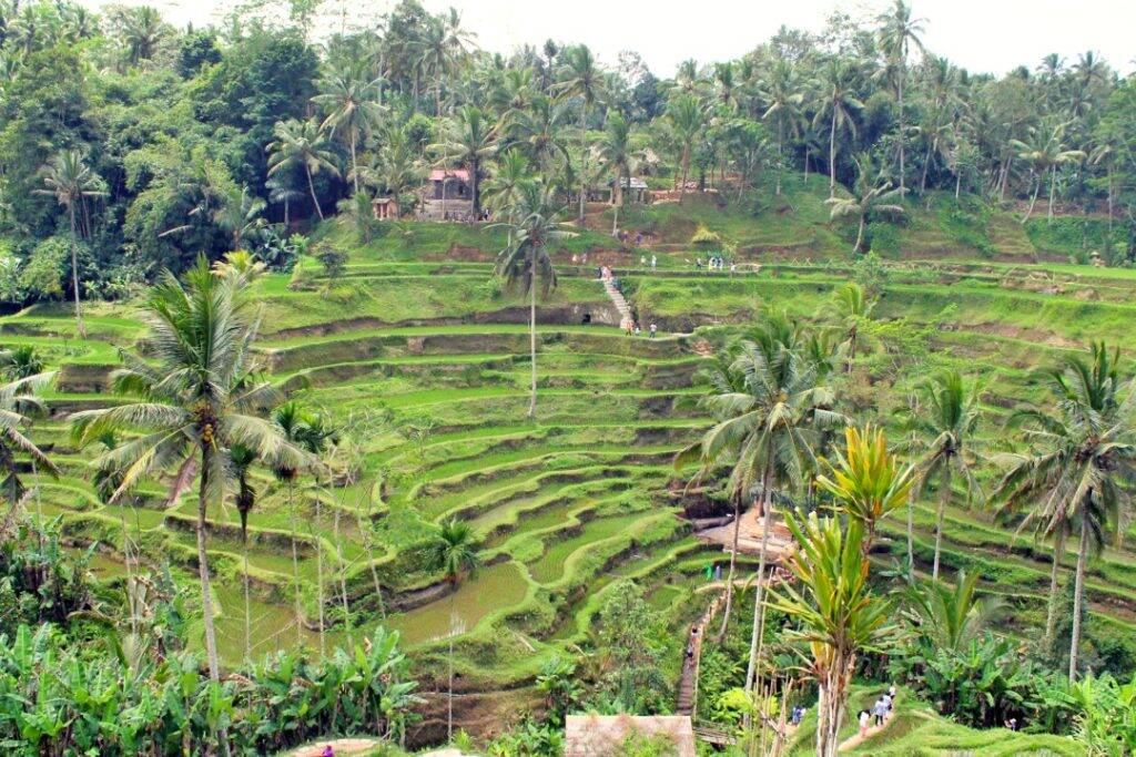 Tegallalang_rice_terrace_Ubud Bali - Indonesia - Viagem pela Ásia