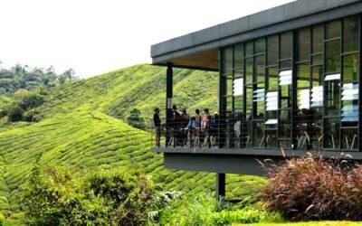O que fazer em Cameron Highlands, na Malásia