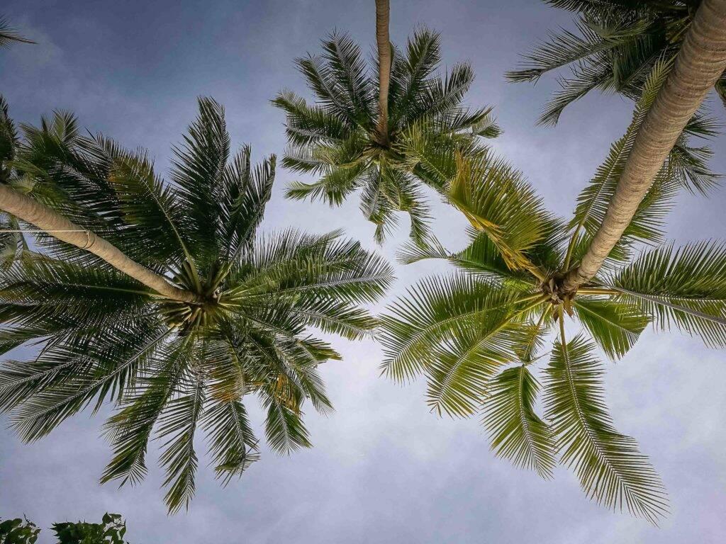 Paisagem comum em Koh Tao, ilha cheia de coqueiros lindos - Sai Nuan Beach