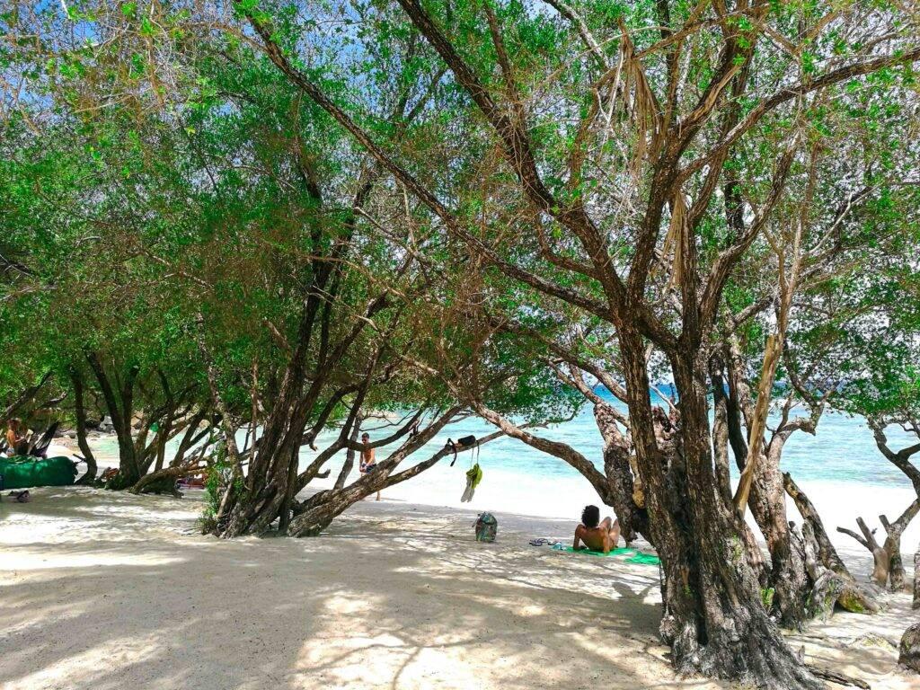 Areia fofa com árvores no meio da praia em Freedom Beach