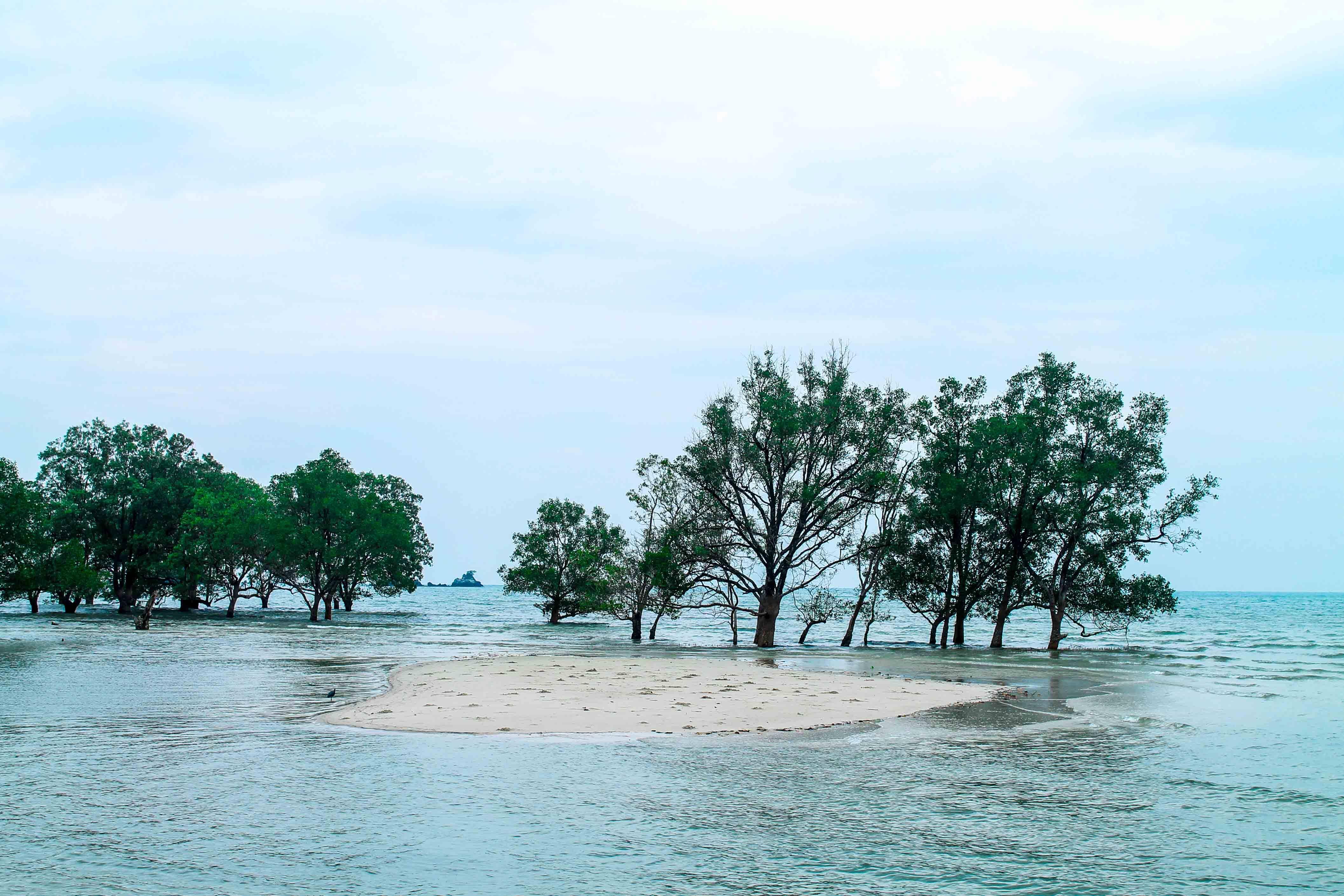 Uma parte da floresta inundada na parte sul da Ao Khao Kwai (Buffalo Bay) na Tailândia