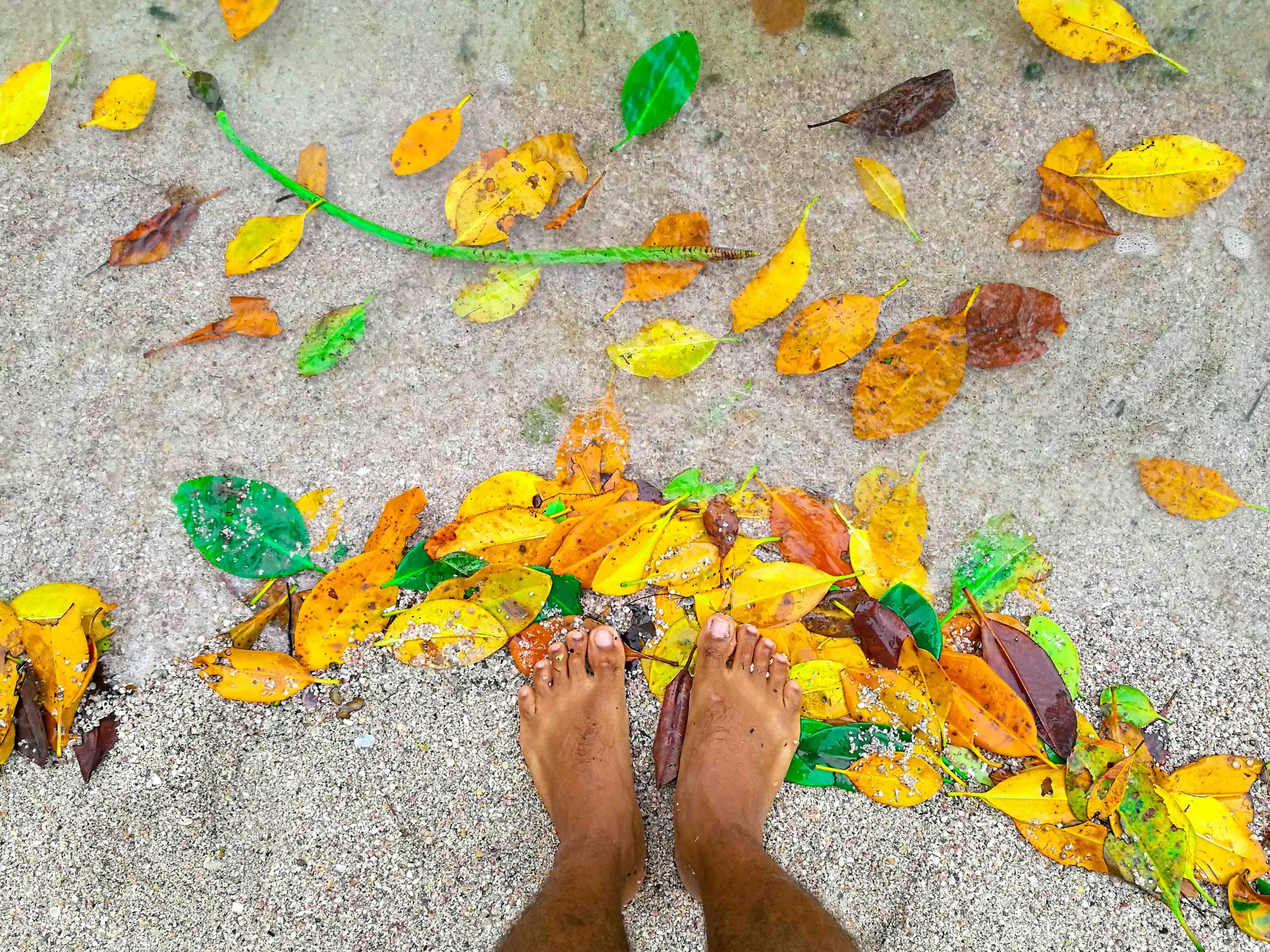 Folhas que caem das árvores, formando um cenário lindo - Koh Phayam