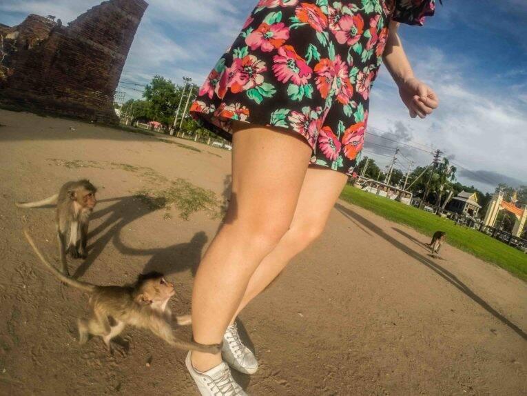 Cuidado com os macacos em Lopburi