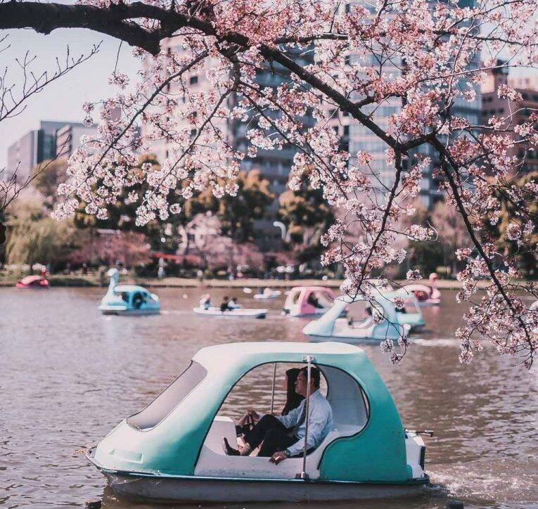 O lago no Ueno Park durante a temporada de Cherry Blossom no Japão