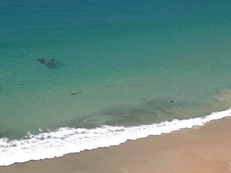 Vista da Praia do Sancho do Alto, detalhe para os tubarões e raias no meio do cardume.