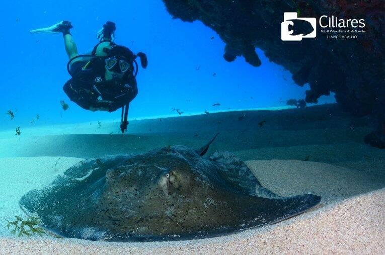 Foto de mergulho em Fernando de Noronha (embarcado) tirada pela empresa de foto e video Ciliares