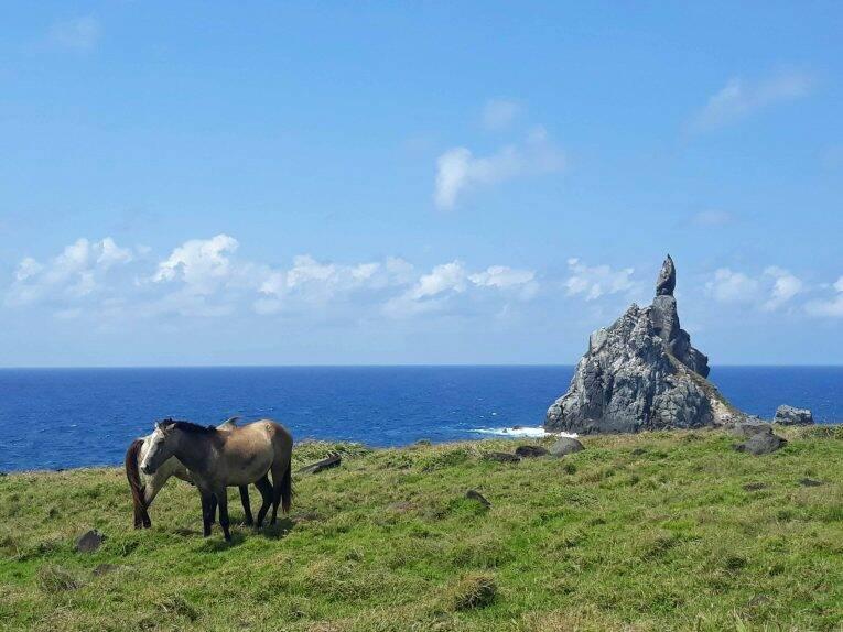 Trilha longa do Atalaia, vista para o Morro do Frade e os cavalos em Noronha.
