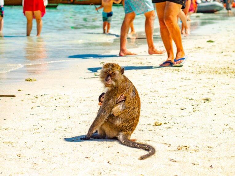Monkey beach em Phi Phi Islands.