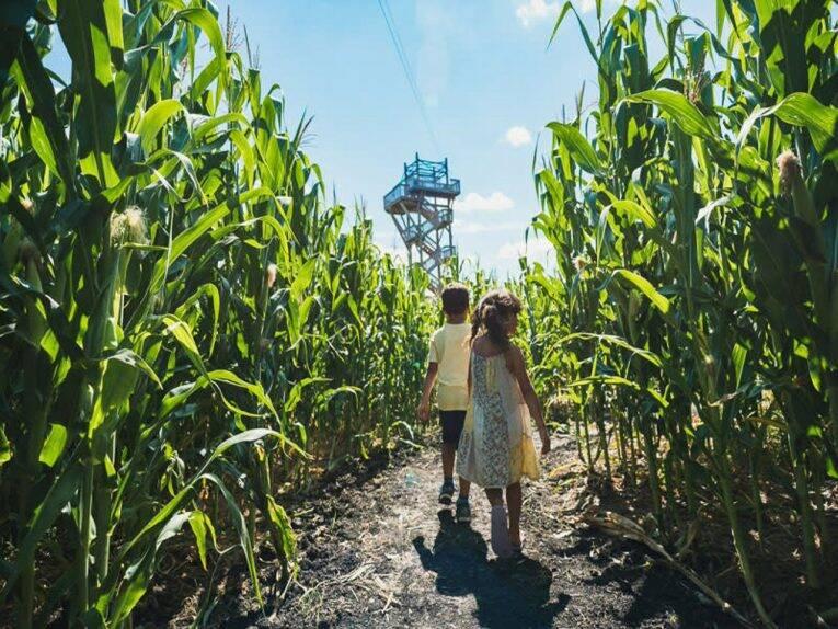 Se perdendo entre os corredores de milho do A Maze in Corn. | Foto: divulgação