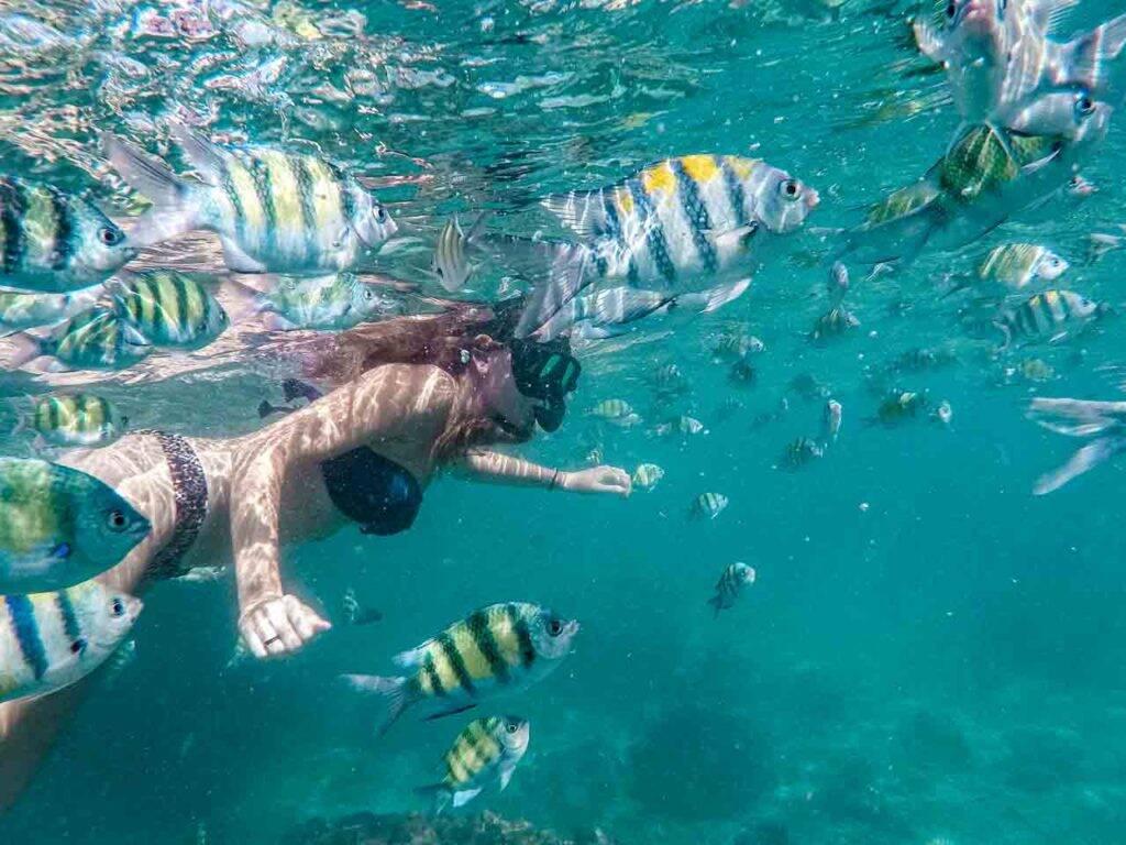 Snorkeling em Phi Phi - Tailândia - Nadando com peixinhos