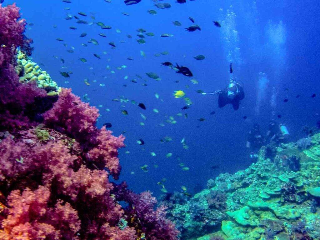 Mergulho na Tailândia - Hin Daeng - Phi Phi