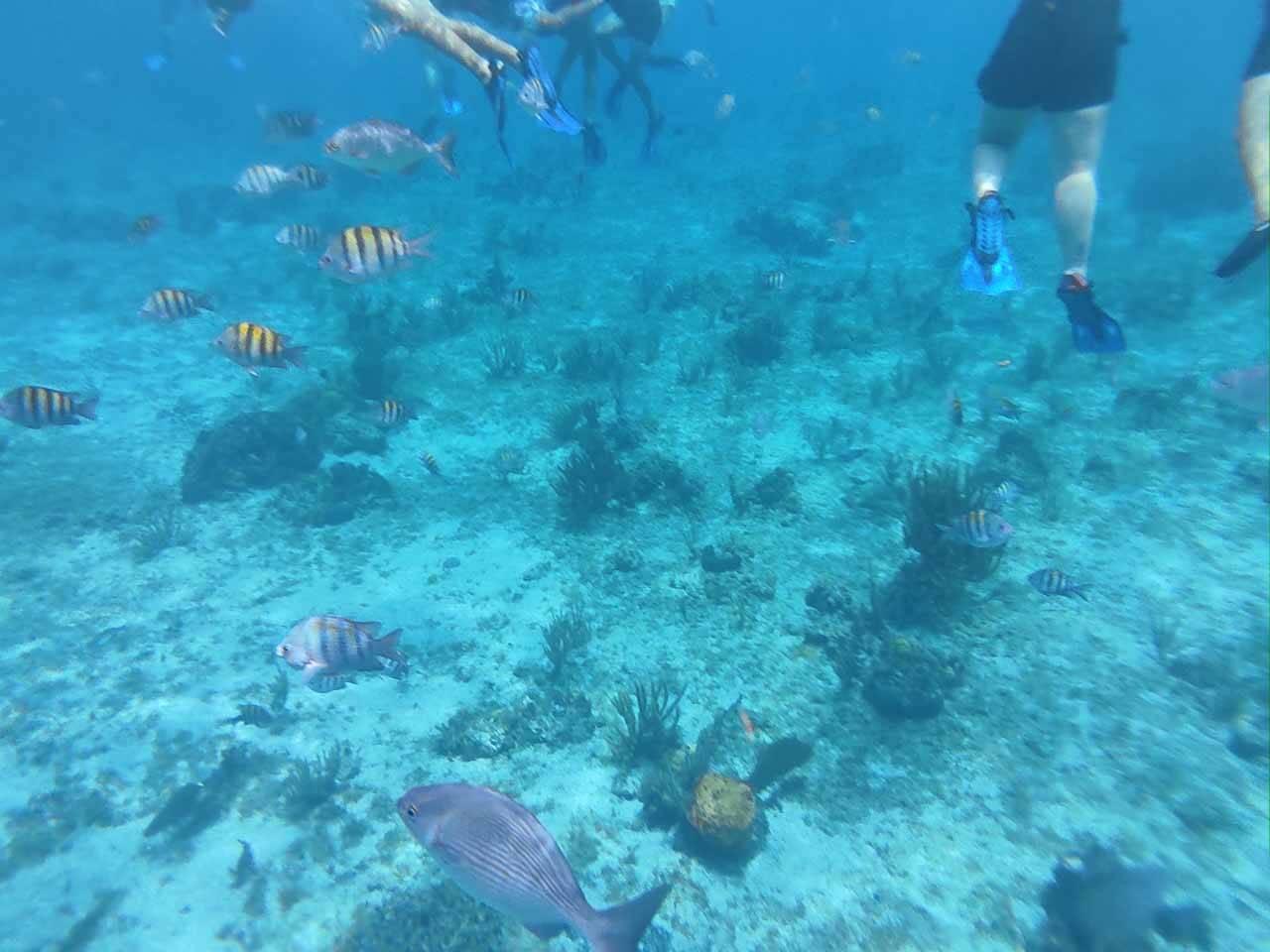 Snorkeling em Cancun no México.
